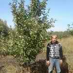 Яблоня сортовая