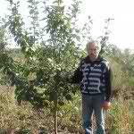Яблоня сортовая 5-6 лет