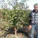 Вишня  сортовая(4-5 лет)4500 p.